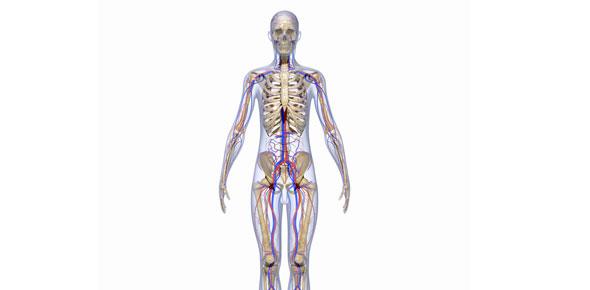 Exercise Physiology Exam 2