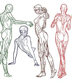 Anatomy And Physiology Exam Quiz