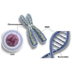Simple Genetics Quiz
