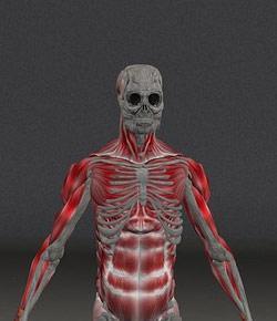 Anatomy Leukocytes Quiz