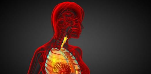 20 Questions On The Respiratory System