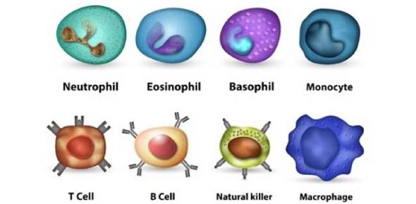 Immunology Quiz- Basic Concepts - ProProfs Quiz