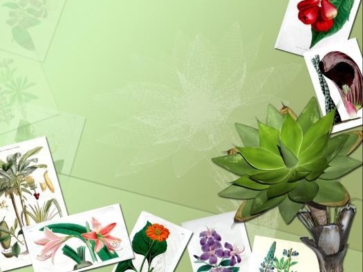 Botany Lab Exam