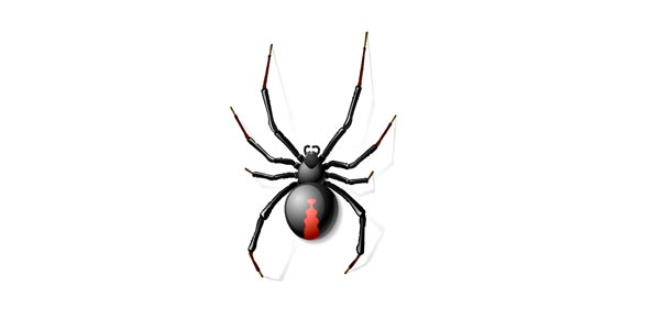 Spinning Spiders: Ld Symptom And Categories Exam