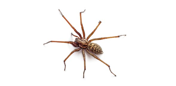 Spinning Spiders: QA Pip Exam