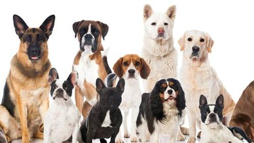 Which Dog Breed is Right for Me?
