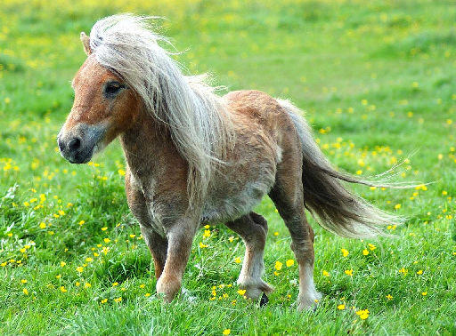 Little Horse Pony Quiz!
