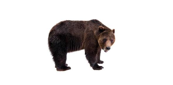 Touching Spirit Bear Vocabulary Quiz