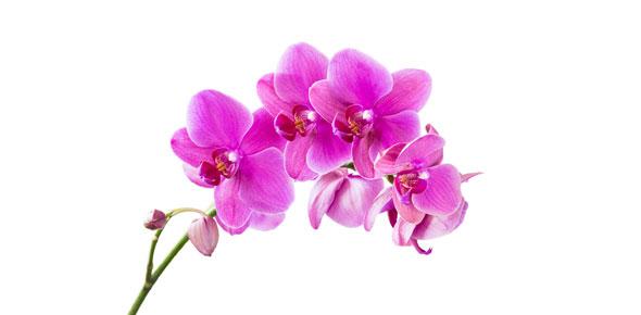 Flowers For Algernon Quiz