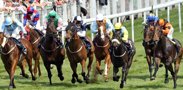 Are You Horse Racing Champion?