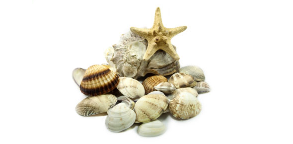 Introduction To Marine Biology Exam