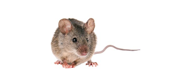 What Kind Of Rodent Are You?