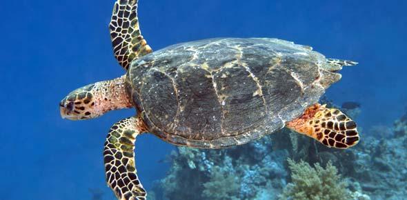 Sea Turtles (Test Quiz)