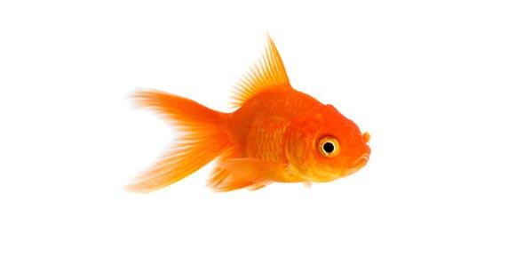 Fish Not A Fish