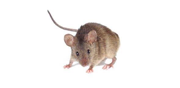 Name That Mouse !!