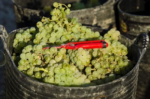 Bubbly Prof Quizzes: Wine Mini #8 (updated June 2020)