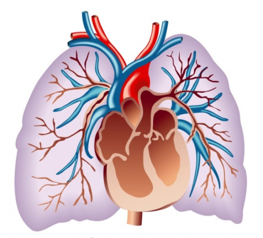 Pulmonary Hypertension Overview And Treatment