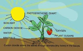Year 9 Ecology And Photosynthesis