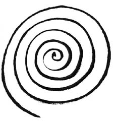 Spiral Review Quiz For Students! Test
