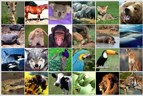 What Animal Are You Quiz?