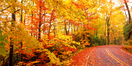 What Do You Know About Autumn Leaf Color?