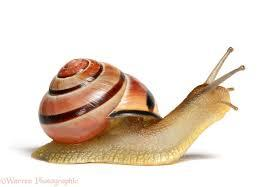 What Do You Know About Snails?
