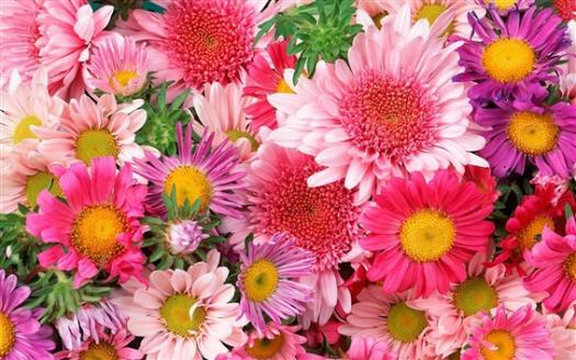 What Does Your Favourite Flower Say About You?