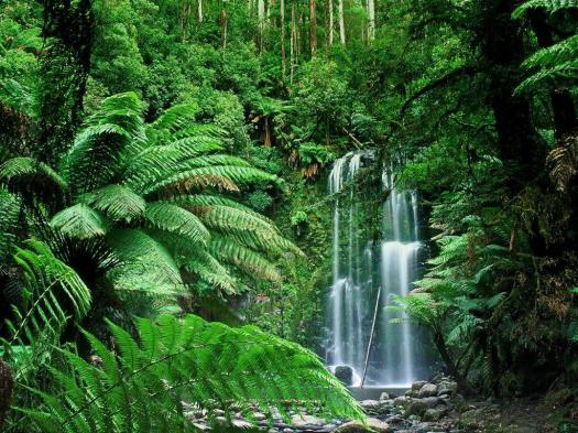 The Human Impact On Biodiversity In Tropical Rainforests Areas Of The World
