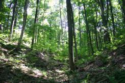 Ontario Tree ID Quiz