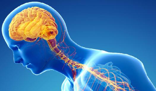nervous system practice quiz Nervous system einstein's  nervoussystem brain labs tutorials  review quizzes brain 1  use the web site tutorials and practice quizzes.