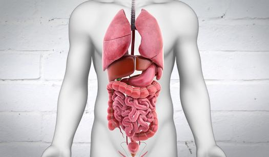 Test Your Knowledge On Digestive System Quiz