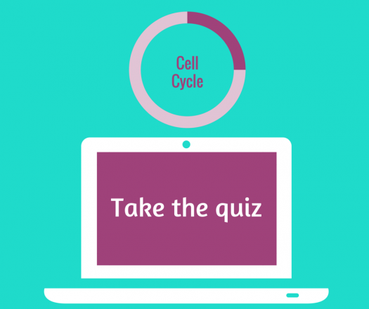 Cell Cycle Quiz (Part 1)