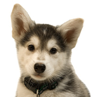Want To Know What Kind Of Dog Should I Get?