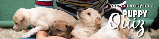 Are you ready to add a puppy to your household?