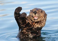 Sea-life Otter Quiz