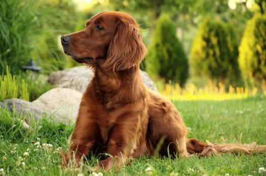 Which Dog Breed Are You?