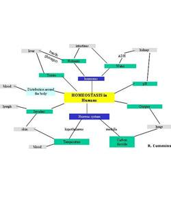 Body Organization And Homeostasis Test
