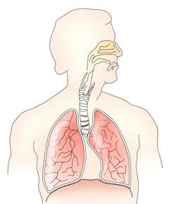 Respiratory System Exam Mode By Rnpedia
