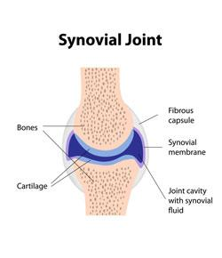 synovial joints and special movements - proprofs quiz, Sphenoid