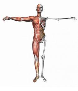 Musculoskeletal Problems (Exam Mode) By Rnpedia.Com
