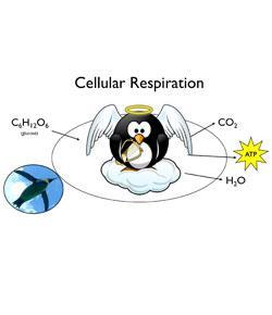 Cellular Respiration: In Depth!