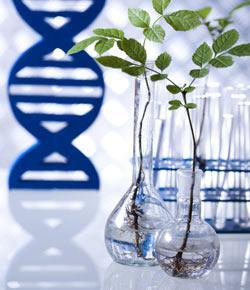 AP Ch 17 Biotechnology