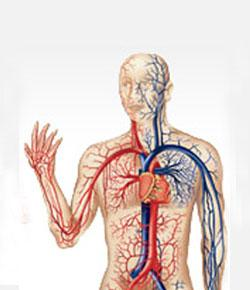 Circulatory system final test proprofs quiz circulatory system final test ccuart Images