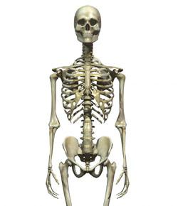 The Skeletal System: Multiple-choice Questions