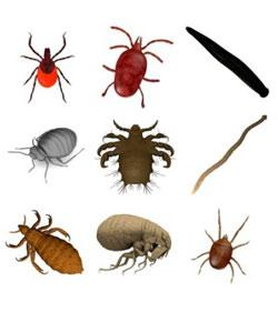 Do You Know About Parasitology?