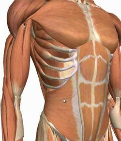 Abdominal wall and peritoneum proprofs quiz abdominal wall and peritoneum ccuart Choice Image
