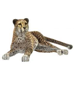 Cheetah Girls Names