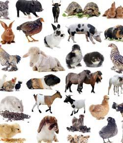 Animal Icon Personality Quiz!