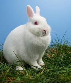 Flying Mint Bunny Quiz