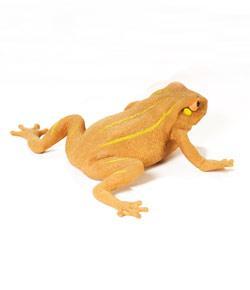 Amphibian Vocalization (Frog Call) Quiz